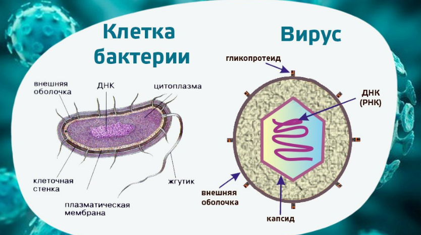 Антибиотик от ротовирусных инфекций